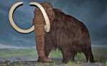 800px-Woolly_Mammoth-RBC